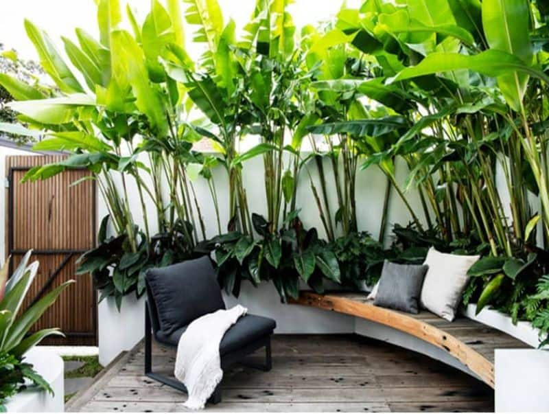Banana trees/leaves, adding add both shade and ambience to a garden