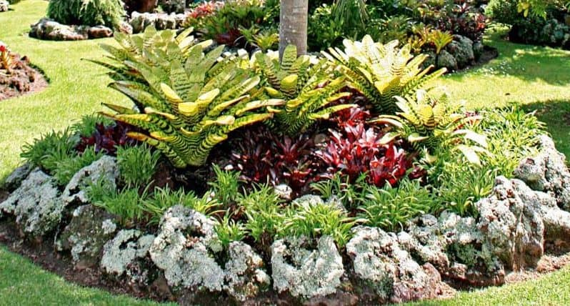Tropical plants surrounded with mulch