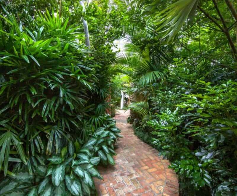 A garden pathway lined with beautiful and bright tropical flowers