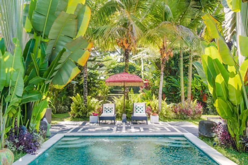A pool paired with massive tropical leaves and palm trees
