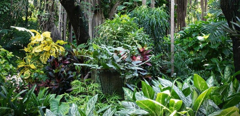 Hanging vines increasing the appeal of a tropical garden
