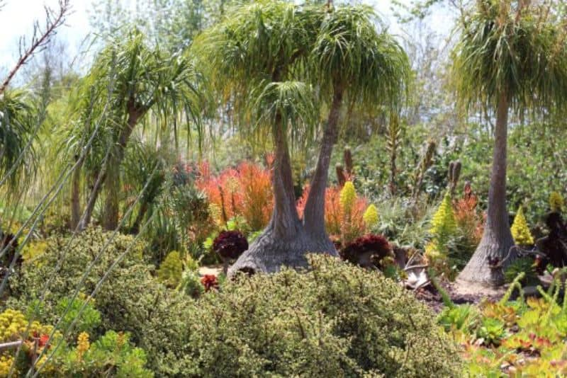 Unique tropical trees, giving off a knockout design