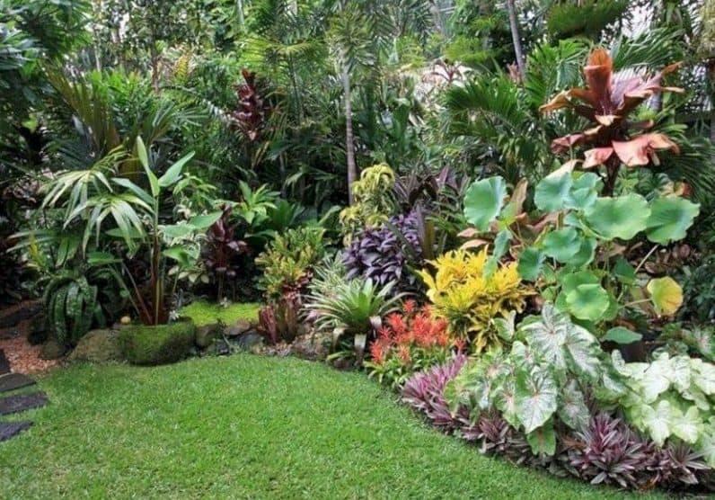 Instant tropical landscape