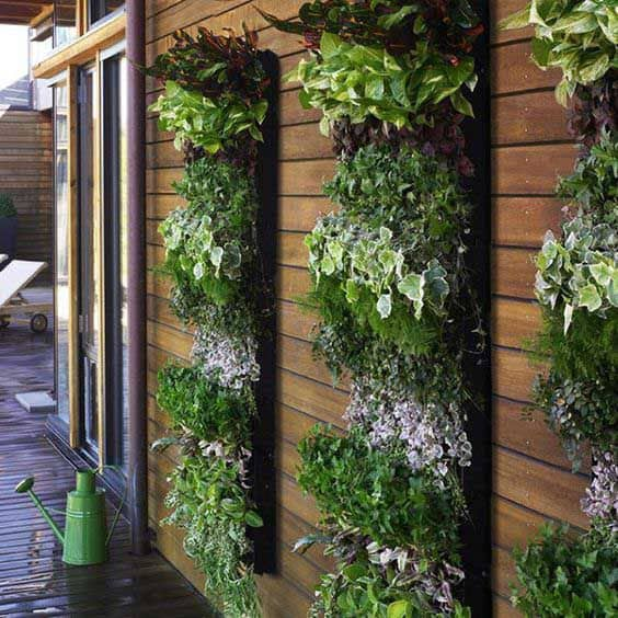 Plant walls that help spruce up a plain fence