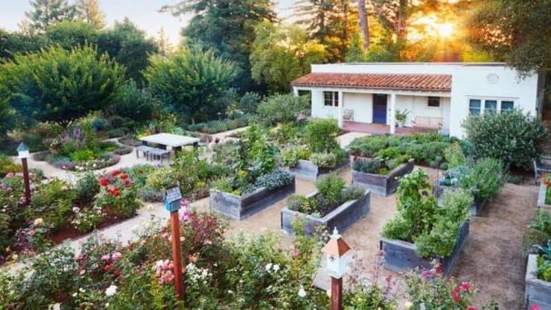 Huge sensory garden