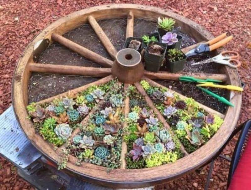 Flowers in old cart wheel