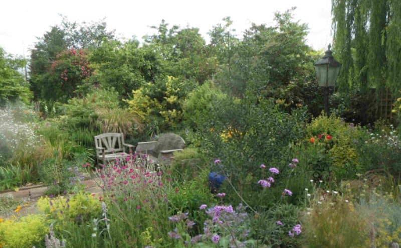 A fully grown garden with tall grass