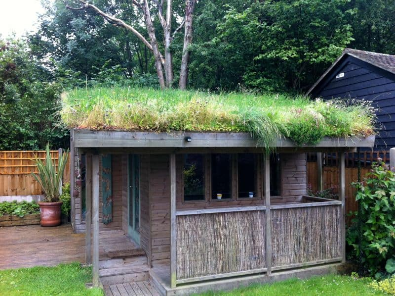 A shed green roof