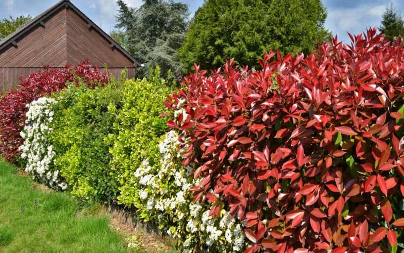 Colourful hedges as an alternative to fences