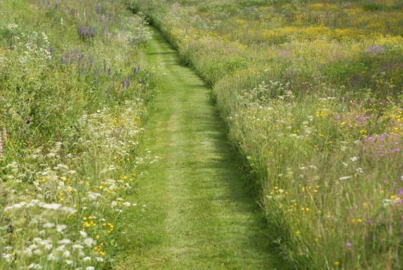 Lawn yard pathway