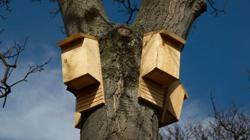 DIY bat houses attached to tree branches