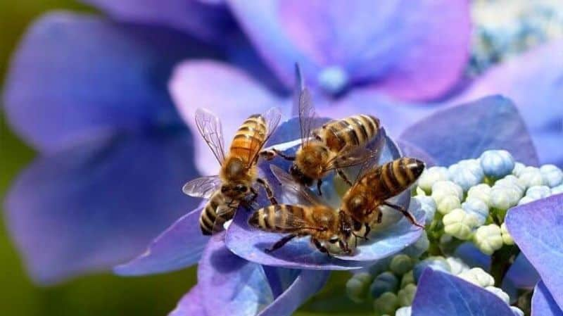 A bunch of bees on a single flower