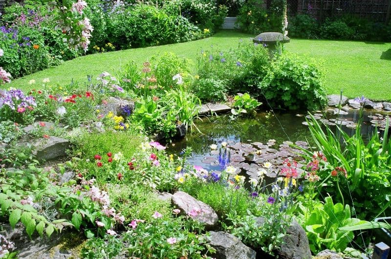 A backyard filled with insect-friendly plants