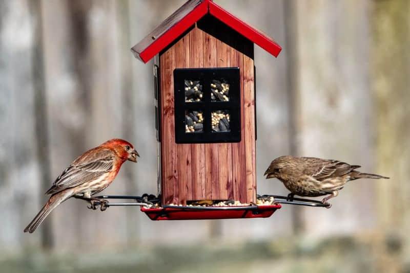 A bird feeder with two birds
