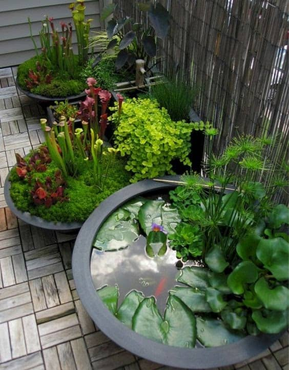 Small ponds with individual bowls
