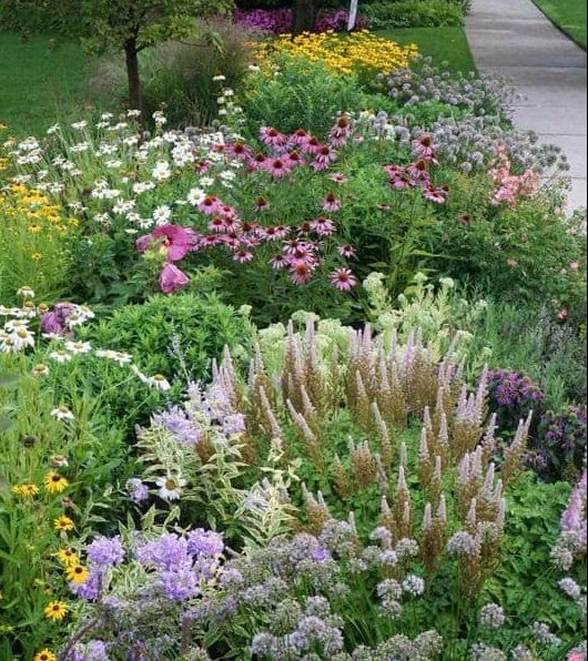 Colourful front yard with appealing flower arrangement