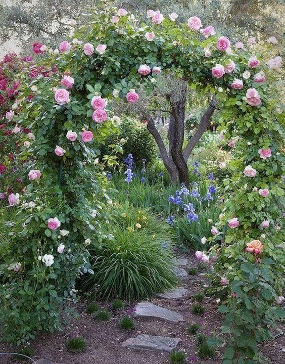 A garden path with flower arch