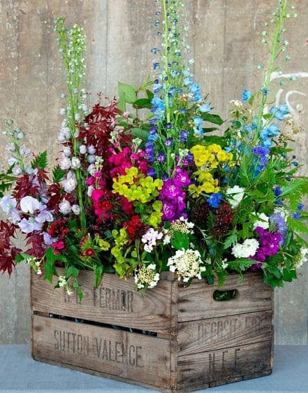 Recycled old wine box used as a flower crate