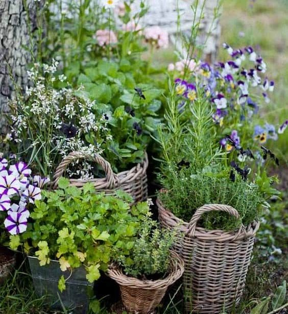 Plant and flower in unused baskets