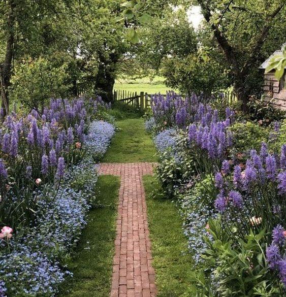 Lavender and brick path