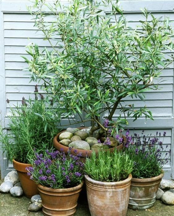 Mini trees and plants in pots