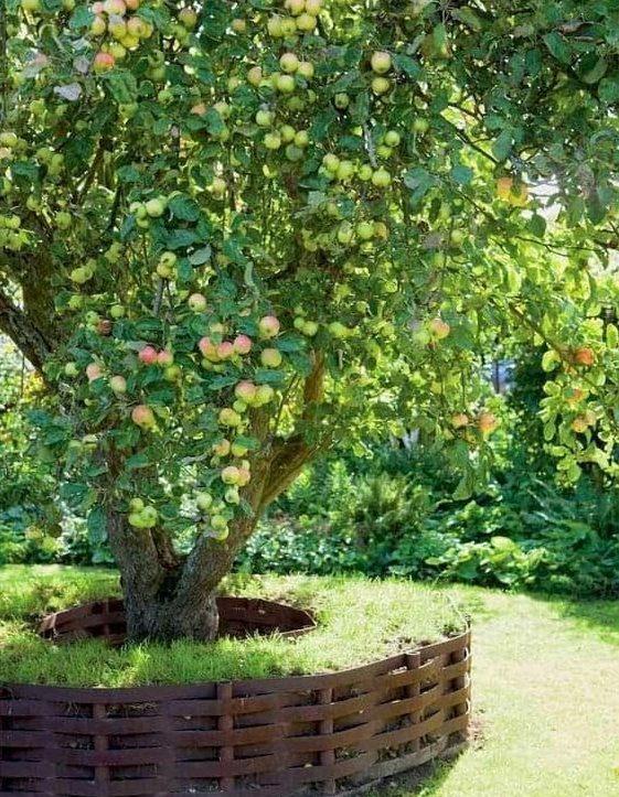 Raised garden bed for apple trees
