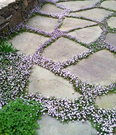 Stone path with small flowers