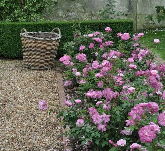 Gravel and flowers as a great, low maintenance alternative to lawn