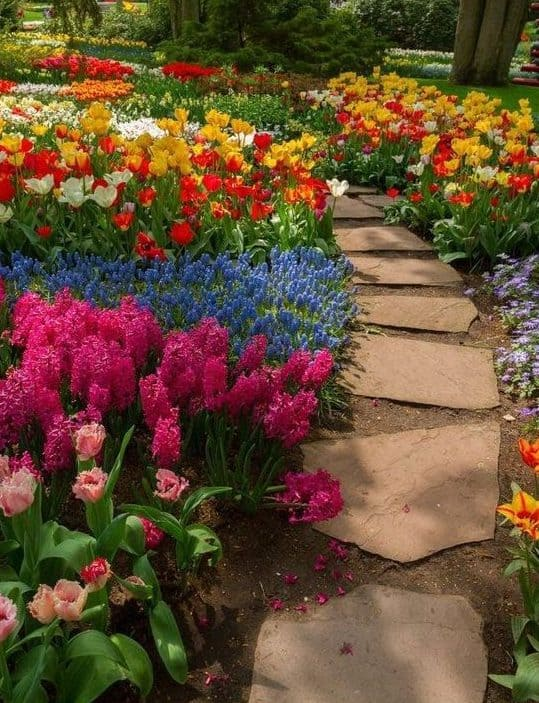 Stone path with flowers