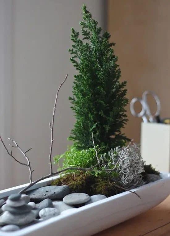 Indoor rock mini garden