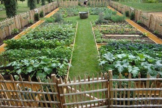 Huge fenced vegetable garden in a massive size yard