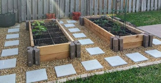 Small vegetable garden with stepping stones