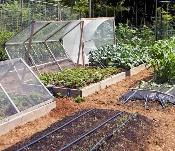 Removable greenhouse roof for garden beds