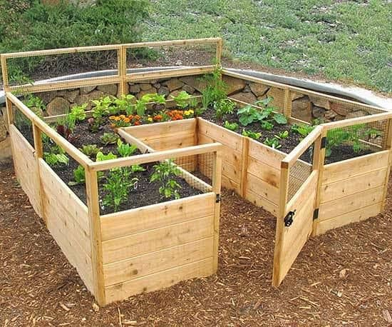 Tiny raised and enclosed garden bed
