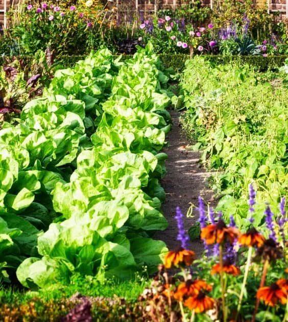 Huge spring vegetable garden