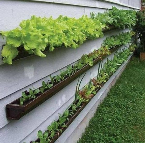 Wall mounted herb garden made of wood