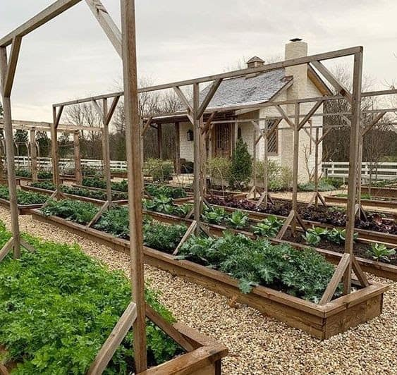 Wooden garden beds with raised frames