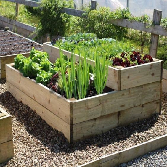 Tiered vegetable planter in a small garden space