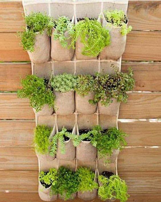 Shoe organizer vegetable garden