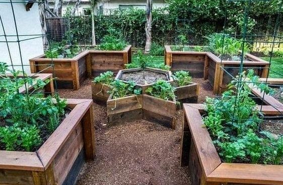 Star-shaped garden bed