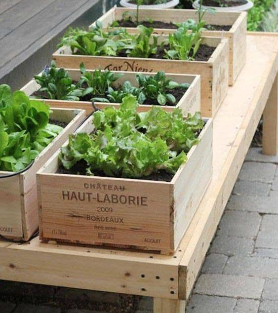Herb garden in wine boxes