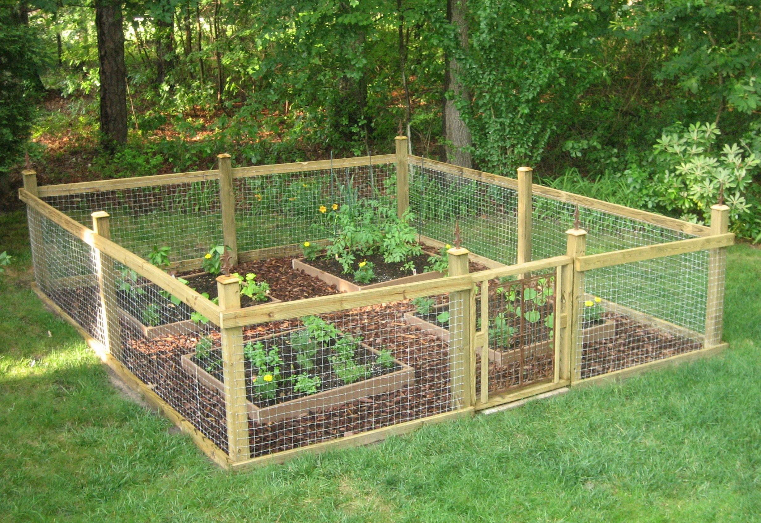 Fenced vegetable garden with wire mesh