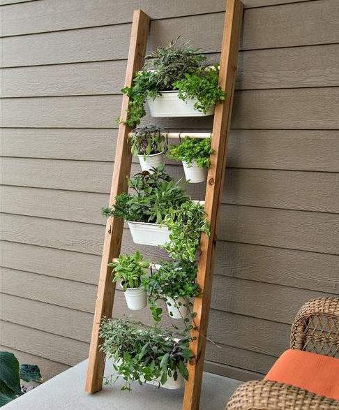 Ladder vertical garden
