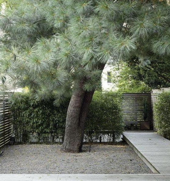 Wooden deck next to tree