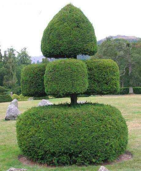 Chinese trimmed bushes