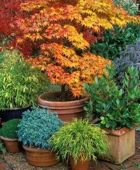 A variety of colourful plants including Acres and bonsai trees