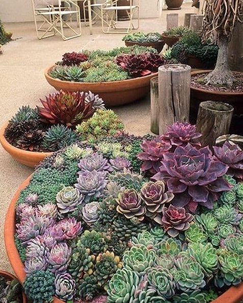 Succulent porch garden