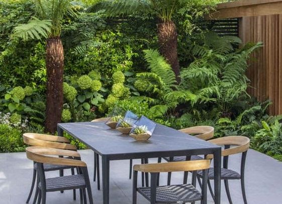 Palm trees that create an exotic hideaway right in a backyard