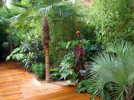 A garden wooden deck surrounded by leafy greens and luscious palm trees