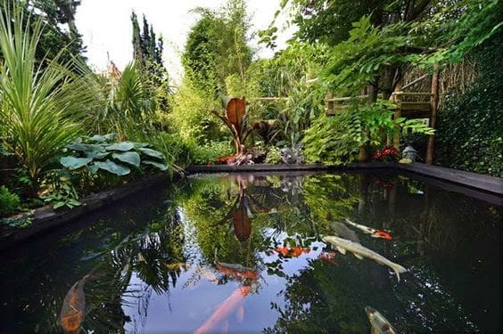 Fish lake and exotic garden